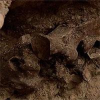 Phát hiện hóa thạch ngựa 14.000 năm tuổi khi xây bể bơi