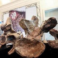 Phát hiện hóa thạch những con khủng long lớn chưa từng thấy
