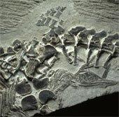 Phát hiện hóa thạch quái vật thời tiền sử chết khi sinh con