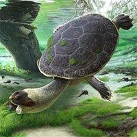 Phát hiện hóa thạch rùa mặt ếch cổ đại chuyên hút mồi