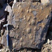 Phát hiện hóa thạch sinh vật 545 triệu năm trước