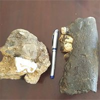 Phát hiện hóa thạch tê giác Rhinoceros siensis gần đồng bào Rục