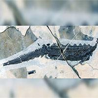 Phát hiện hoá thạch thú mỏ vịt cổ xưa nhất