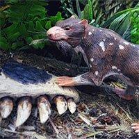 Phát hiện hóa thạch thú tiền sử có hàm răng kỳ quái