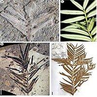Phát hiện hóa thạch thực vật 160 triệu năm tuổi