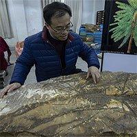Phát hiện hóa thạch thực vật 300 triệu năm tuổi