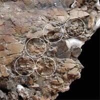 Phát hiện hóa thạch trứng 75 triệu năm tuổi trong cơ thể rùa mẹ