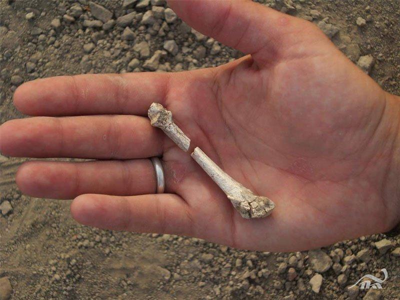 Phát hiện hóa thạch xương người sống trên cây