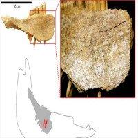 Phát hiện kinh ngạc về dấu vết con người ở Bắc Mỹ 24.000 năm trước
