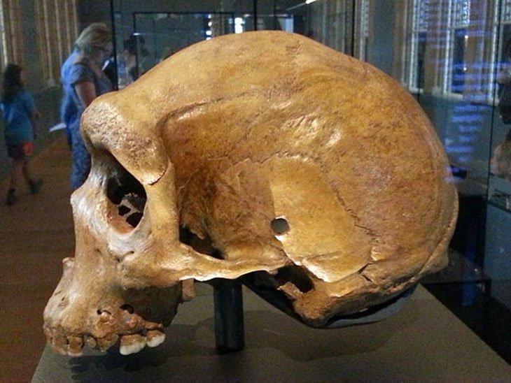 Phát hiện lỗ đạn trên các hộp sọ tiền sử hàng triệu năm tuổi
