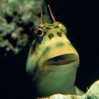 Phát hiện loài cá đang tiến hóa để chuẩn bị bỏ nước lên bờ sống