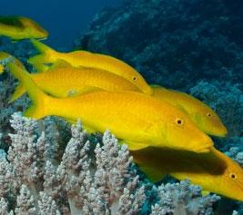 Phát hiện loài cá săn mồi tập thể
