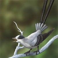 Phát hiện loài chim cổ đại có răng kỳ lạ ở Trung Quốc