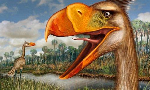 Phát hiện loài chim khủng bố đáng sợ nhất thời tiền sử