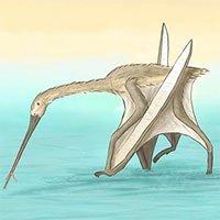 Phát hiện loài dực long mới có mỏ dài bất thường