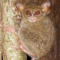 Phát hiện loài khỉ được mệnh danh