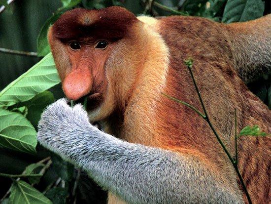 Phát hiện loài khỉ