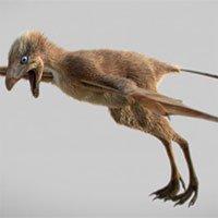 Phát hiện loài khủng long có cánh dơi tại Trung Quốc