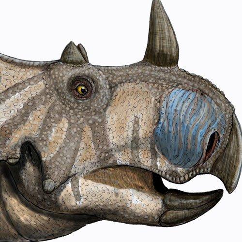 Phát hiện loài khủng long có sừng mới