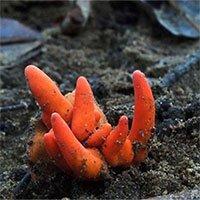 Phát hiện loài nấm cực độc ở Úc