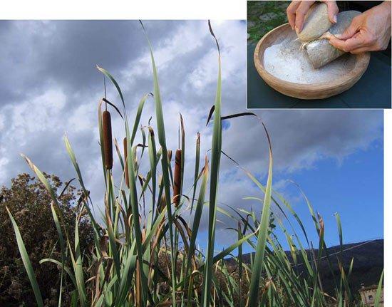 Phát hiện loài người biết chế biến món ăn cách đây 20.000 năm