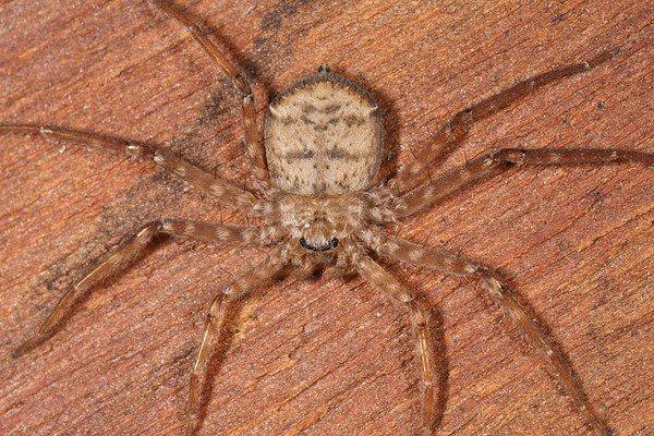 Phát hiện loài nhện biết