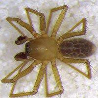 Phát hiện loài nhện mới