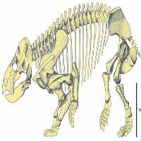 Phát hiện loài thằn lằn khổng lồ ăn cỏ mới sống cách đây hơn 200 triệu năm