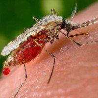 Phát hiện mới: Bệnh sốt rét xuất hiện từ thời Đế chế La Mã