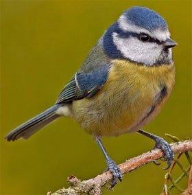 Phát hiện mới: Loài chim cũng biết