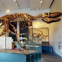 Phát hiện mới về giác quan của khủng long