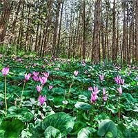 Phát hiện mới về thính giác các loài hoa