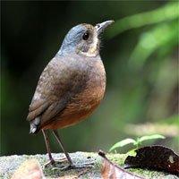 Phát hiện một loài chim mới