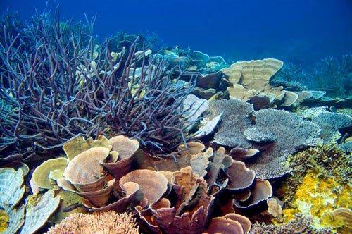Phát hiện một số loài san hô thích nghi với biến đổi khí hậu