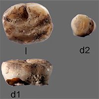 Phát hiện người thời kỷ băng hà ở Siberia thông qua răng sữa