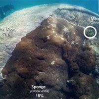 Phát hiện quần thể san hô cổ đại khổng lồ 400 năm tuổi