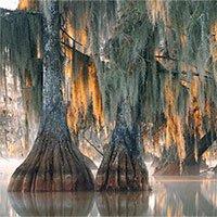 Phát hiện ra cây 2.624 năm tuổi siêu hiếm trên Trái đất