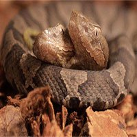 Phát hiện rắn độc hai đầu trong vườn nhà dân Mỹ