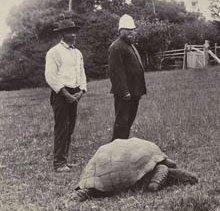 Phát hiện rùa sống thọ nhất thế giới