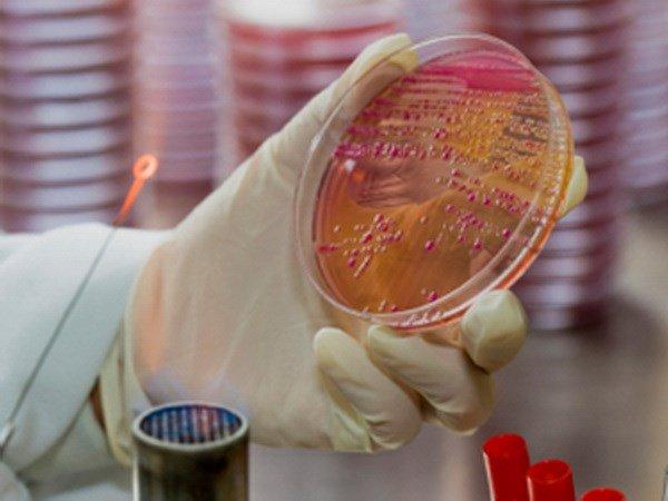 Phát hiện siêu vi khuẩn kháng thuốc gây chết người tại Australia