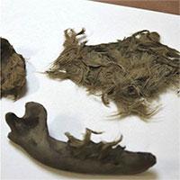 Phát hiện sọ người và xác chó còn nguyên lông ở Anh