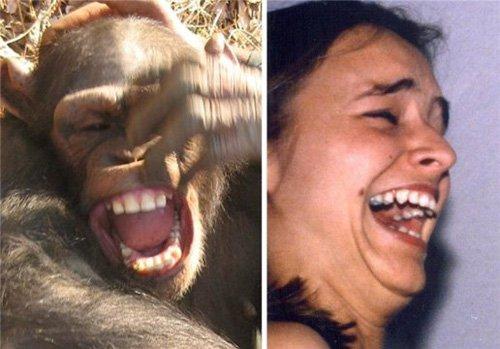 Phát hiện sự giống nhau trong nụ cười giữa tinh tinh và người