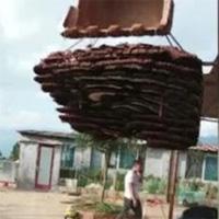 Phát hiện tổ ong 10 tầng to như cái nhà, dân làng gỡ xuống để đem đi đăng ký kỷ lục Guinness