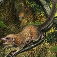 Phát hiện tổ tiên 65,9 triệu tuổi của chúng ta, giống… chuột