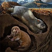 Phát hiện tổ tiên của động vật có vú đào hang ở Trung Quốc