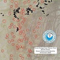 Phát hiện tới 5.000 bào thai hải cẩu ở bờ biển Namibia
