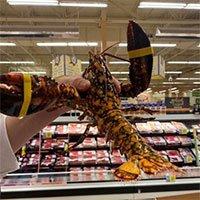 Phát hiện tôm hùm lạ trong lô hàng ở siêu thị