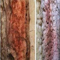 Phát hiện tranh tường 65.000 năm, vẽ bởi loài người đã tuyệt chủng