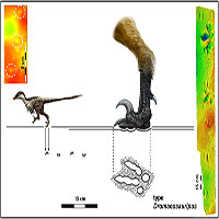Phát hiện vết chân khủng long nhỏ nhất từ trước tới nay