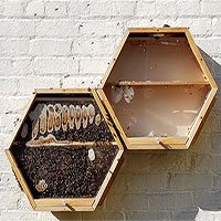 Phát minh đặc biệt cho phép dân thành phố nuôi ong lấy mật ngay trong nhà